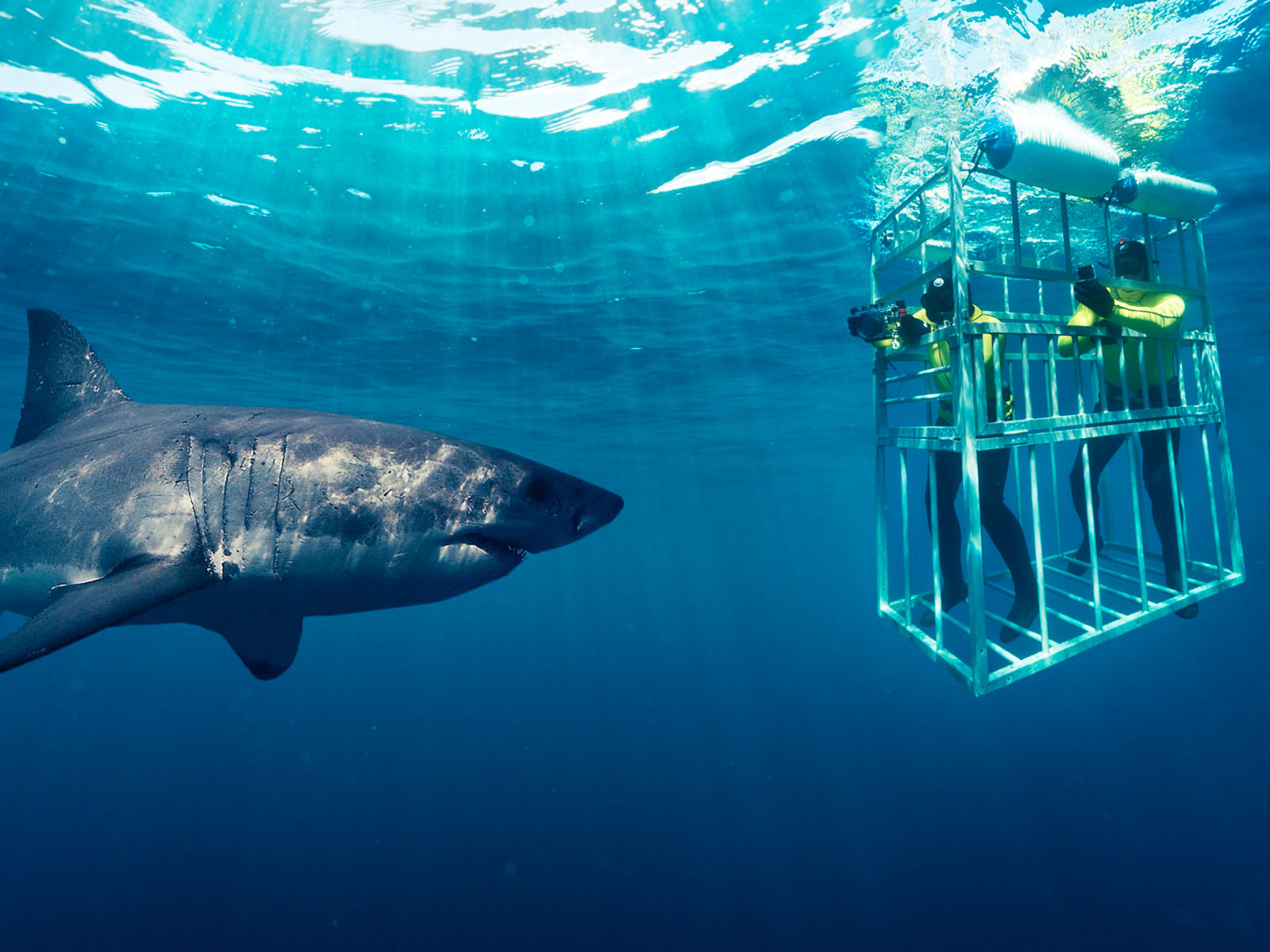 Shark-Cage-Diving-Cape town